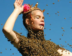Film: Queen of the Sun: What Are the Bees Telling Us?
